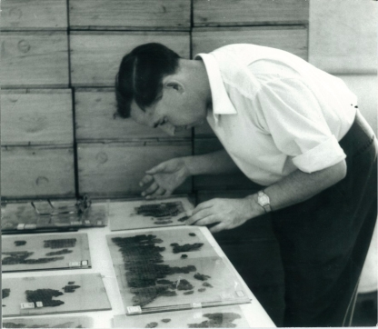 John Allegro studying scrolls fragments, c.1956.