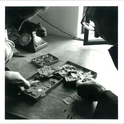John Allegro and Joseph Milik with scroll fragments, c.1956.